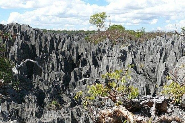 Каменный лес на Мадагаскаре (40 фото)
