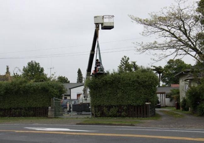 Стрижем верхушки деревьев (4 фото)