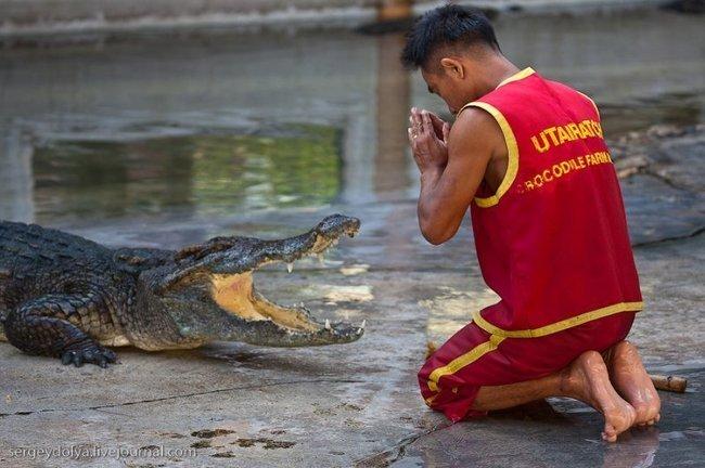 Крокодиловое шоу (21 фото)