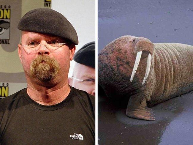 Знаменитости, которые похожи на животных (22 фото)