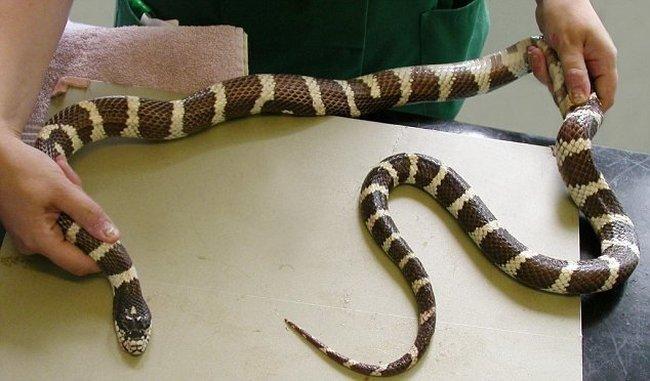 Голодающая змея (2 фото)
