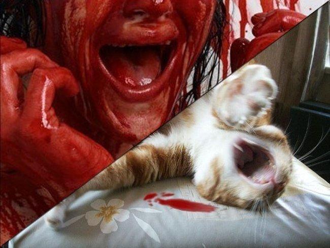 Зверское нападение на кота! ЖЕСТЬ! (2 фото)
