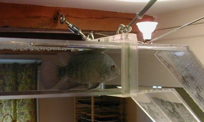 Креативный аквариум (9 фото)