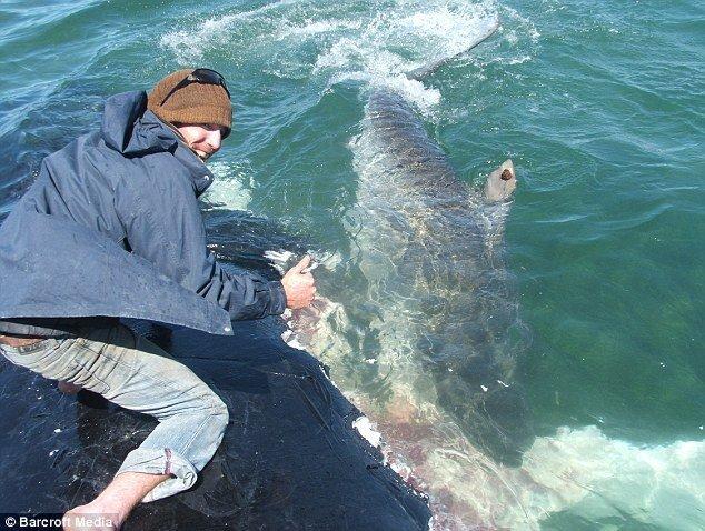 Погладь акулу  (3 фото)