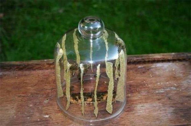 Пчелы делают мед в банке (9 фото)
