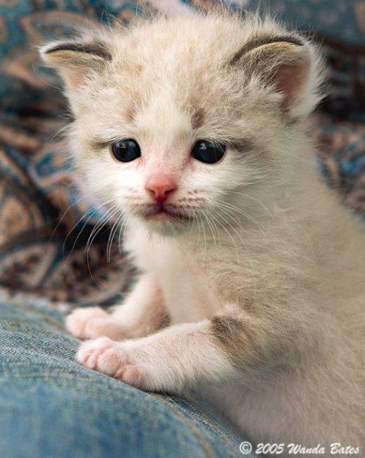 Прикольные котята (110 фото)