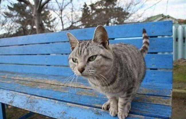 Кошачья внезапность (3 фото)