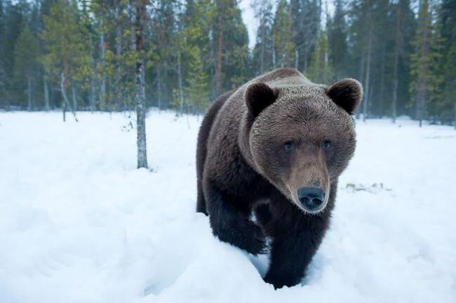 Медвежья жизнь (20 фото)