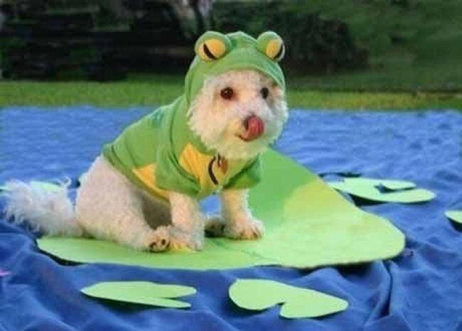 Собачки в прикольных костюмах (11 фото)