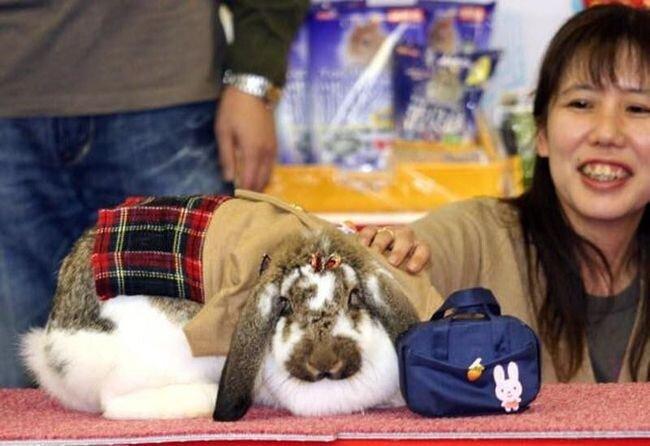 Кроличья мода (13 фотографий)