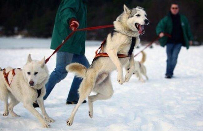 Ежегодное собачье ралли (11 фото)