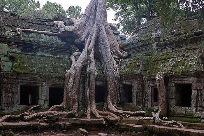 Оригинальные деревья (17 фото)