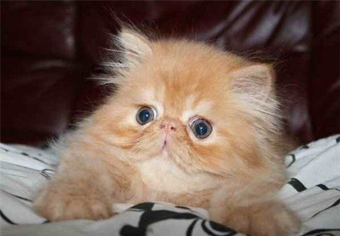 Эволюция рыжего котёнка (19 фото)