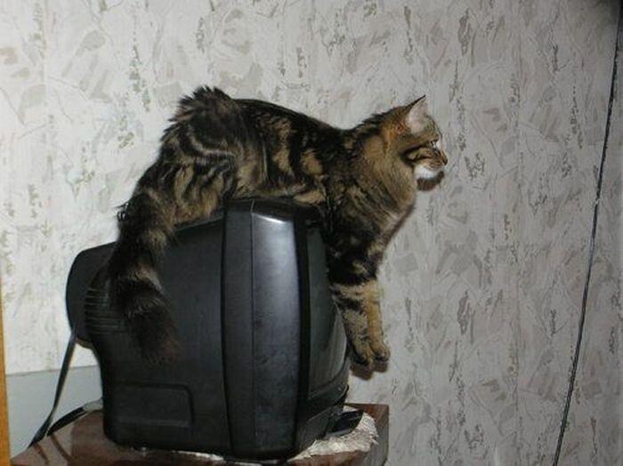 Коты в интерьере (27 фото)