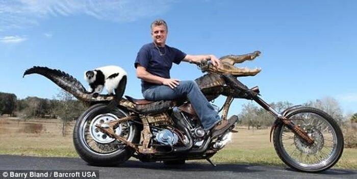 Мотоцикл из аллигатора (4 фото)