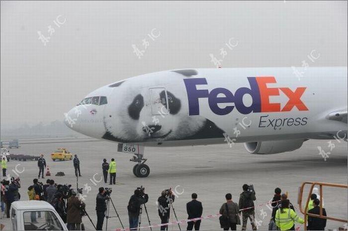 Панды летают на собственном самолете (30 фото)