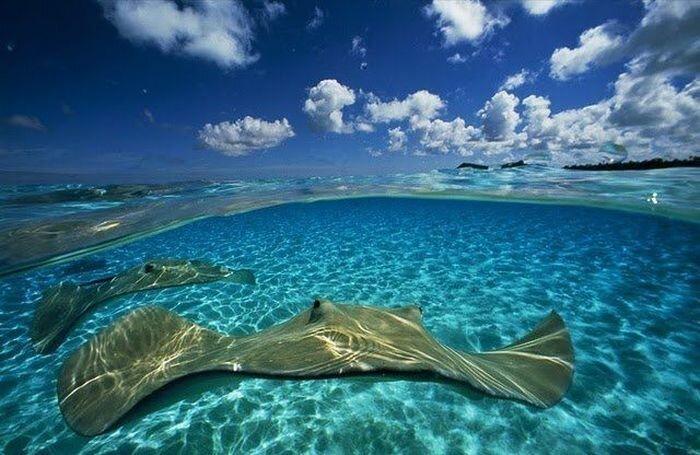 National Geographic. Уникальные фотографии живой природы (40 фото)