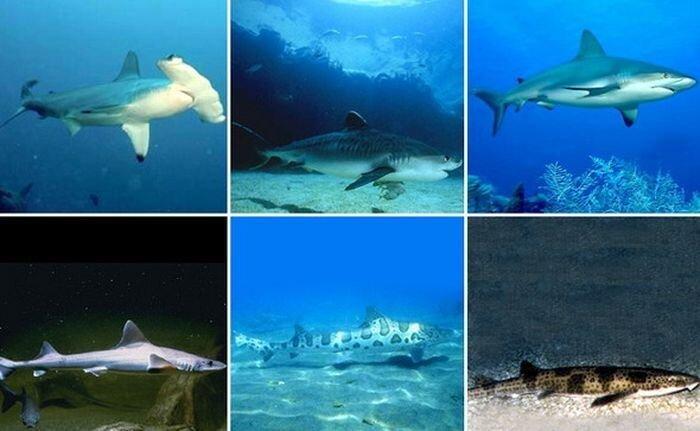 Самые необычные акулы (22 фото)