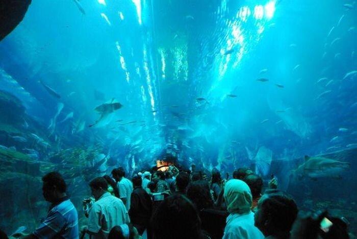 Лопнул самый большой в мире аквариум с акулами! (15 фото+видео)