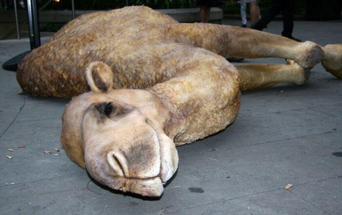 Camelot - копия верблюда на улице города (8 фото)