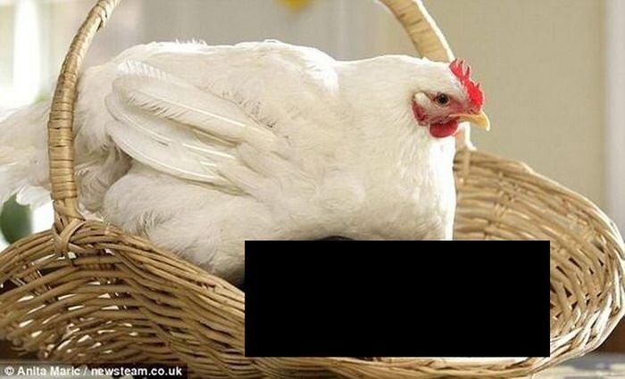 Ничего себе цыплята !!! (3 фото)