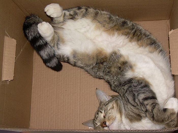 Как комфортно спать в коробке (25 фото)