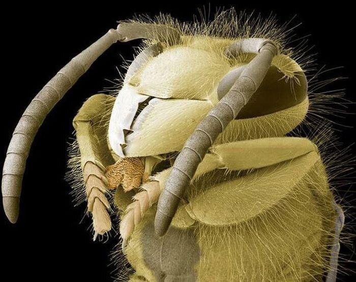 В объективе микроскопа (12 фото)