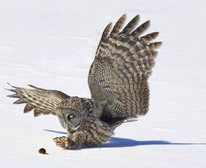Охота на мышку (4 фото)