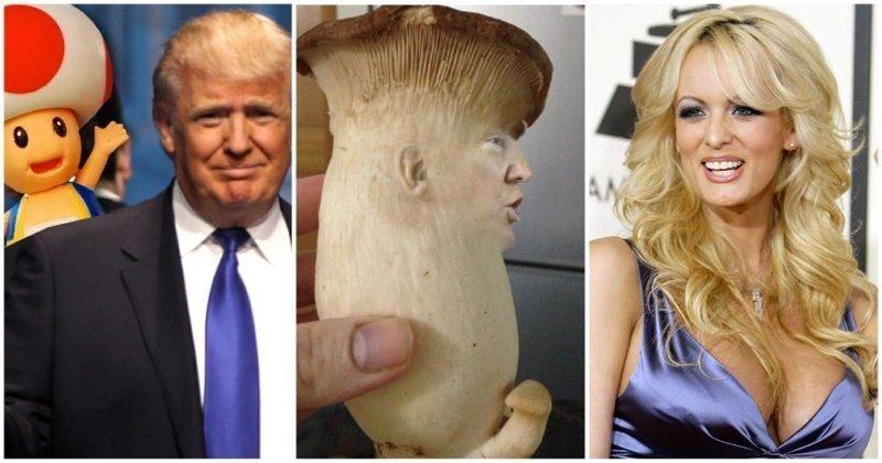 Маленький, как гриб: Скандальные откровения бывшей любовницы Трампа