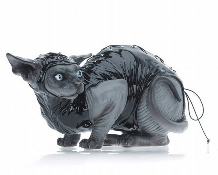 Садо-мазо коты (9 фото)
