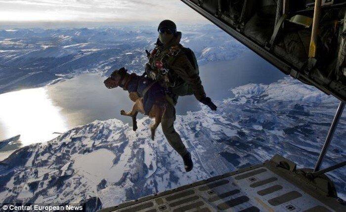 Собаки - парашютисты (3 фото)