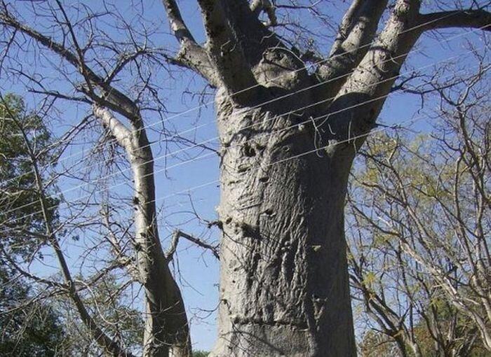 Расслабляющее дерево :)  (4 фото)