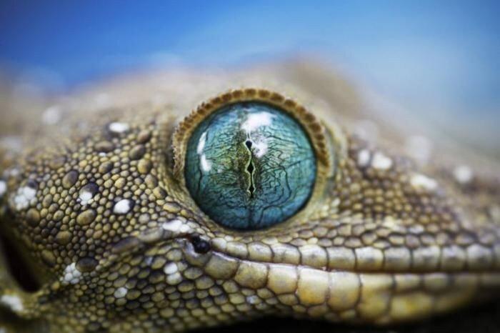 Глаза природы (12 фото)
