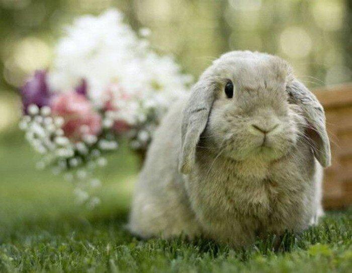 Миленкие зайцы (104 фото)