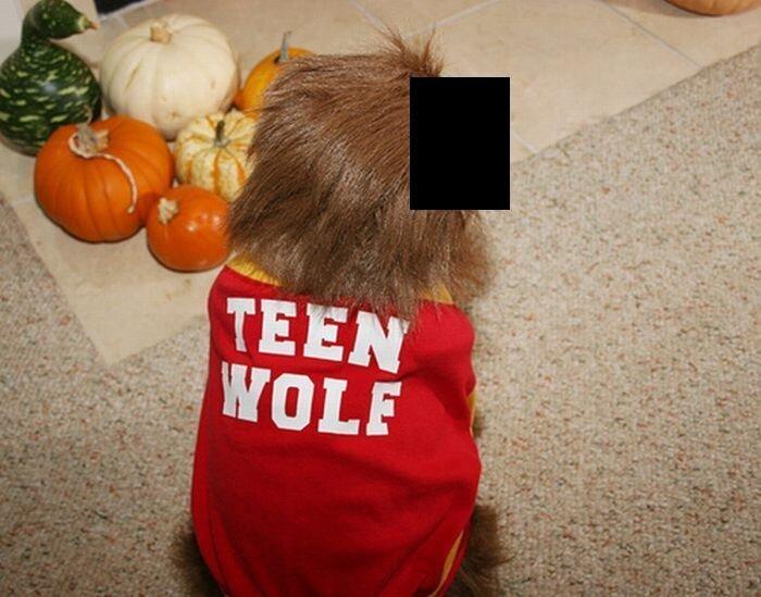 Обезьяноподобная собака (4 фото)