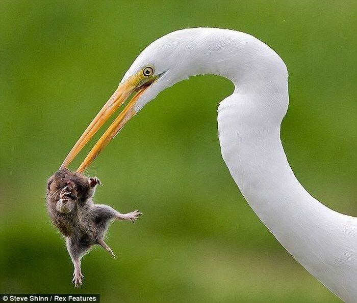 Мышку жалко (4 фото)