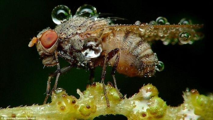 Намокшие насекомые (7 фото)