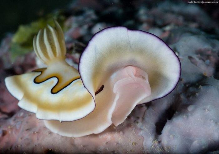 Обитатели подводного мира (51 фото)