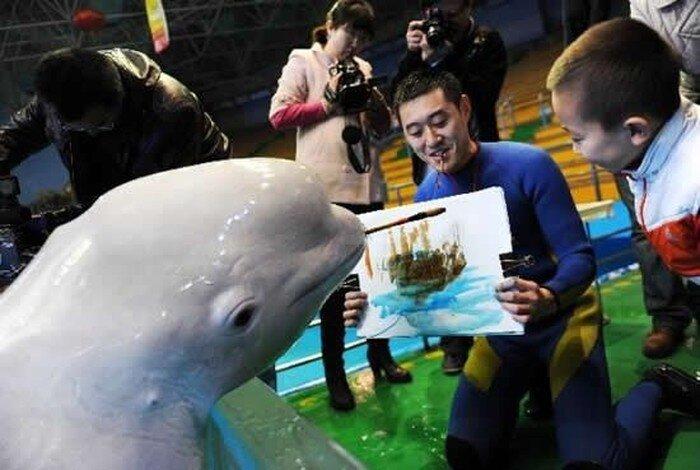 Рисунки дельфина (4 фото)