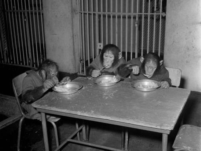 Жизнь в зоопарке (16 фото)