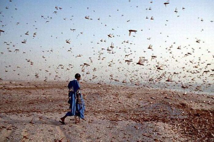 Нашествие насекомых (27 фото)