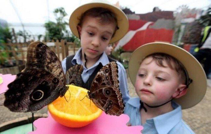 Выставка бабочек (14 фото)