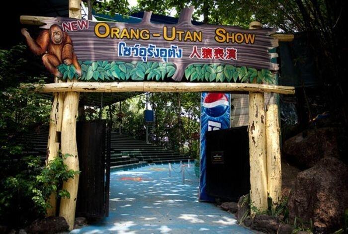 Орангутанги на ринге (14 фото)