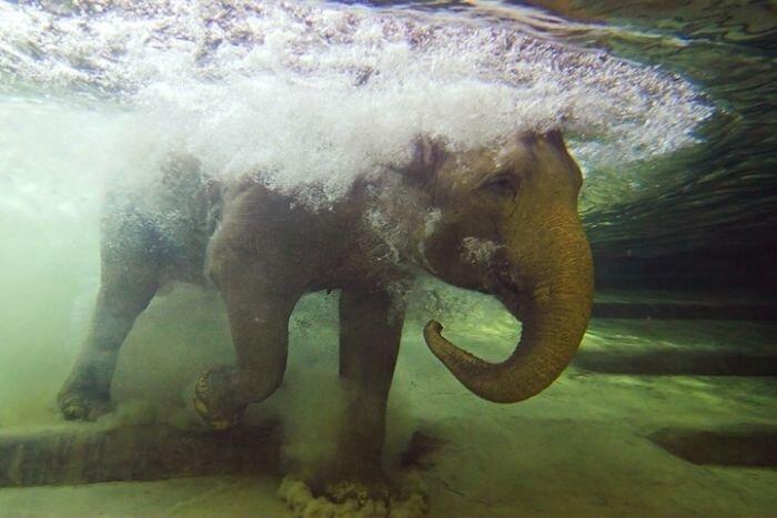 Фотографии самых интересных моментов с животными (30 фото)