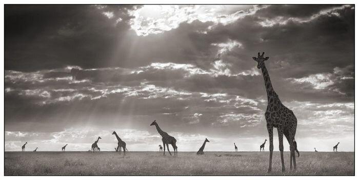 Африка (25 фото)