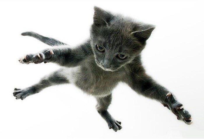 Коты умеют летать (31 фото)