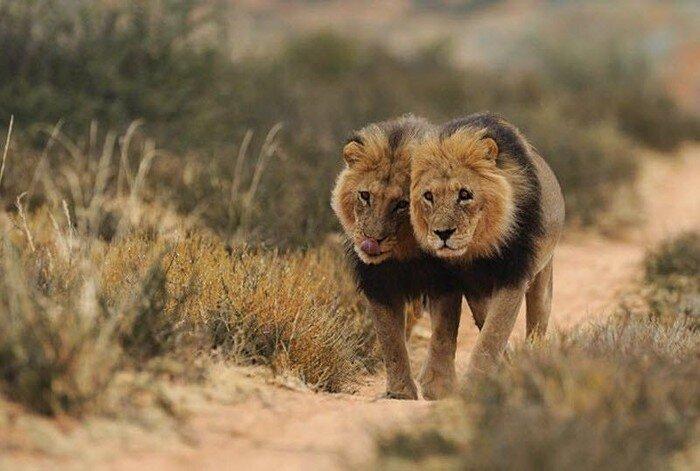 Южноафриканский фотограф (19 фото)