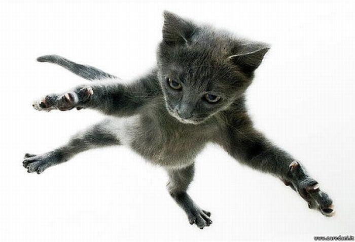 Прыгающие коты (58 фото)