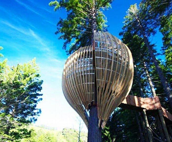 Ресторан на дереве  (7 фото)