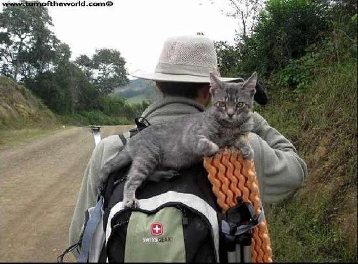 Верный кот-путешественник (10 фото)